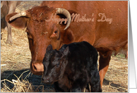 Animal & Pets Mother's Day - Cow & Calf card