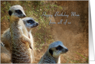 Mom Birthday General - Meerkats card