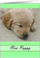 New Arrival Puppy card