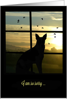 Sympathy Dog in Window at Sunset card
