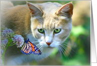 cat and butterfly birthday card