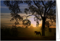 Beautiful Southwestern Sympathy Card With Horse, Oak Tree And Sunset card