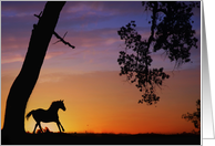 sympathy card horse running in sunset card