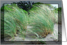 Beach Grass in the Wind card
