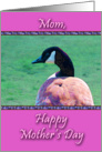 Goose for Mother's Day card