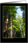 Armstrong Redwoods card