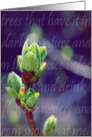 Lilac Buds-Spring Flowers and Gardens card