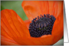 Poppy- Any Occasion card