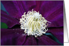 Clematis Bloom- Any Occasion card