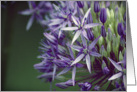 Allium Flower- Any Occasion card