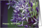 Happy Birthday- Allium card