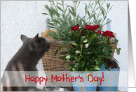 Cat with Red Roses Happy Mother's Day! card