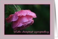 sympathy card raindrops on pink rose card