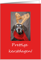 dutch reindeer pointer christmas greeting card