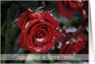 French Red rose in snow Christmas/New Year Card