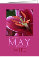 wife Happy May Birthday -Lily May Birth Month Flower card