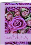 Mother's Day card pink & purple Roses for Neighbor card