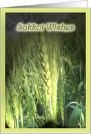 Sukkot Wishes - Crop with sunlight card