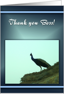 Thank you Boss-Peacock on roof card