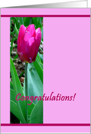Congratulations on adopting a girl - Pink Tulip card
