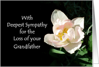 Loss of a Grandfather Sympathy Card - Pink Tulip card