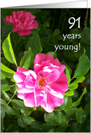 91st Birthday Card - Pink Roses card