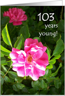 103rd Birthday Card - Pink Roses card