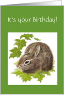 It's your Birthday - Grey Hare - Rabbit card
