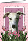Pink Tulips - Whippet card