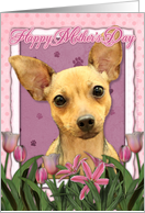 Happy Mother's Day Chihuahua in Pink Tulips card