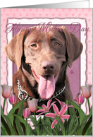 Happy Mother's Day Chocolate Labrador in Pink Tulips card