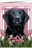 Happy Mother's Day Black Labrador in Pink Tulips card