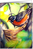 Expecting Baby-Bird in Nest-Robin card