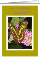 Occupation Specific-School Principal-Happy Birthday-Beautiful Butterfly on Flower card