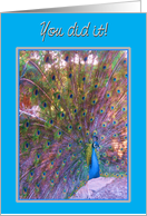 Congratulations-Weight Loss/Dieting Beautiful Colourful Proud Peacock! card
