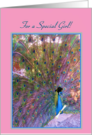 Graduation-For Her-Congratulations- Beautiful Colourful Proud Peacock! card
