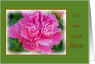 Mom Get Well Special Beautiful Pink Peony Flower card