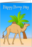 Hump Day, general, smiling camel walking by a palm tree, blue sky card