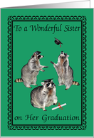 Congratulations To Sister, graduation, raccoons with graduation caps card