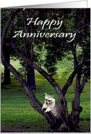 Anniversary, Raccoon in tree card