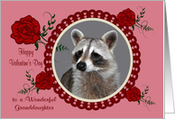 Valentine's Day To Granddaughter, Raccoon in a heart frame with roses card