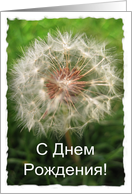Russian Birthday Dandelion Card