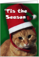Cat in Christmas Hat ~ Tis the Season ~ From Veterinarian card