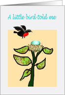 A little bird told me you are now parents, bird, egg and nest.humor card