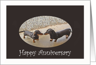Happy Anniversary, two dachshunds.humor card