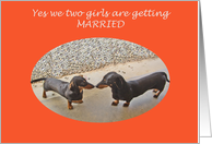 Getting Married Invitation , Lesbian, two dachshunds card