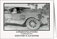 Congratulations on getting your drivers license, dog in car.retro, humor card