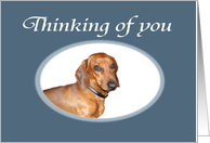 Thinking of you, brown dachshund. card