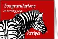 Congratulations on earning your stripes, Military promotion, Zebra card