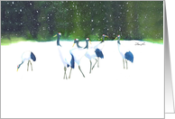 Cancer Encouragement-Red Crowned Cranes card